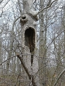 pohon unik